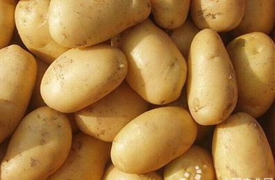 """""""爱心土豆""""在南京桦墅热销"""